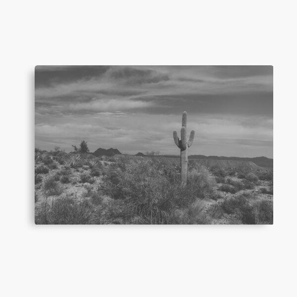 The Lone Cactus Light Matte Canvas Print