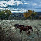 Horses Grazing by Suzi Harbison