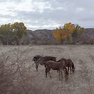 Horses Grazing Sun Washed by Suzi Harbison