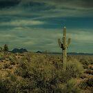 The Lone Cactus Dragan Light by Suzi Harbison
