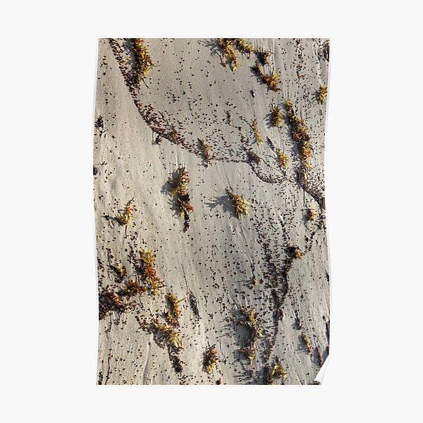 Living Sand Poster