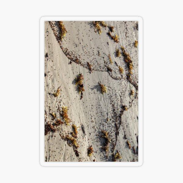 Living Sand Transparent Sticker
