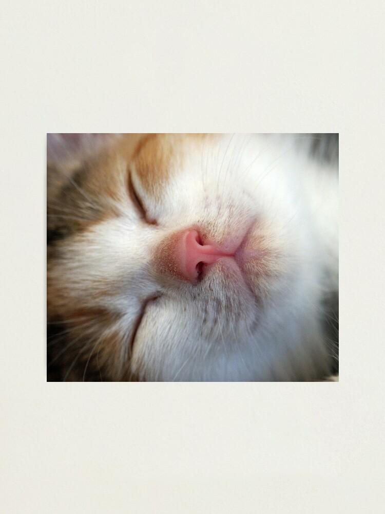 Alternate view of Sleeping Beauty Photographic Print