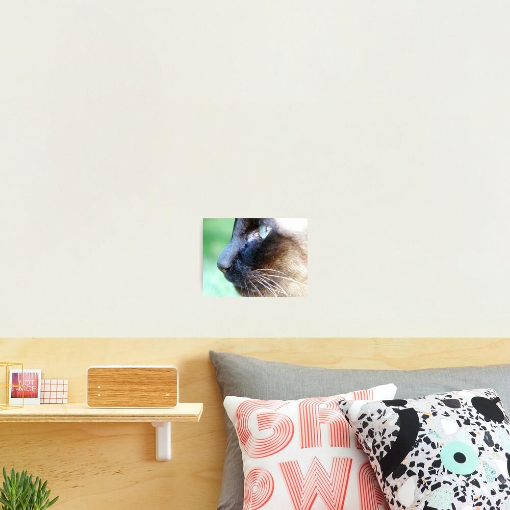 Siamese Photographic Print