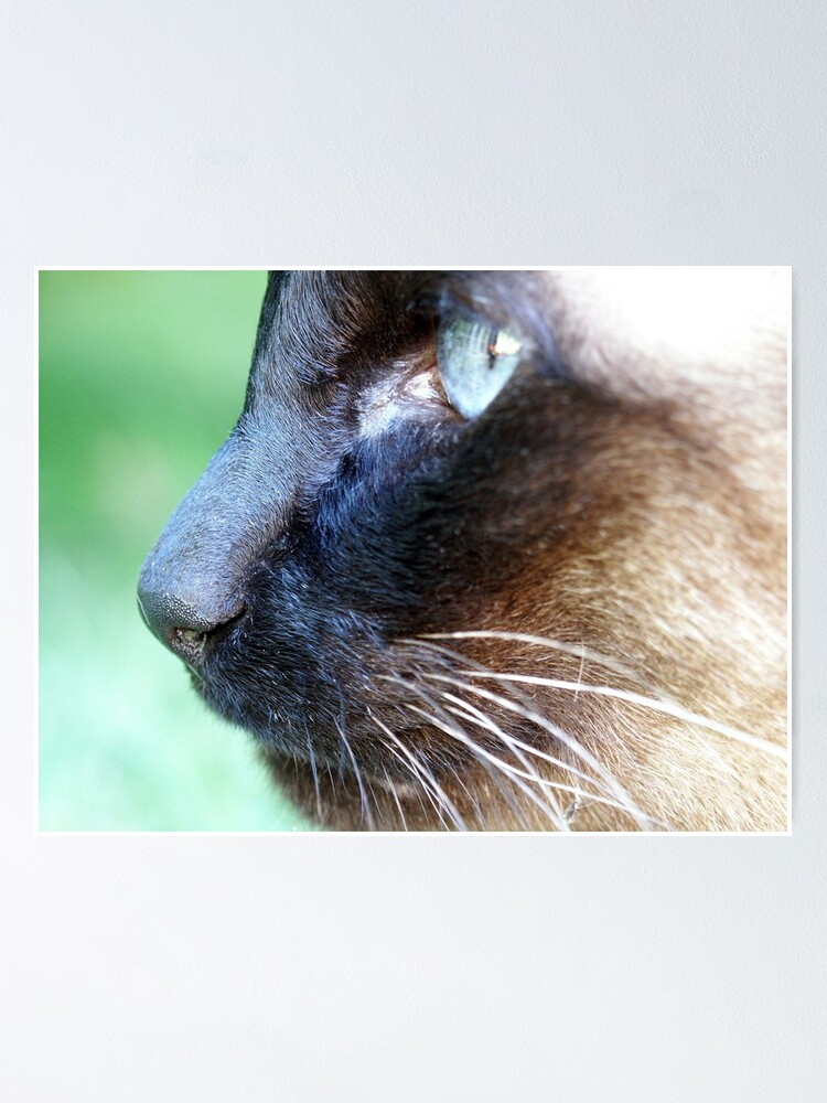 Alternate view of Siamese Poster
