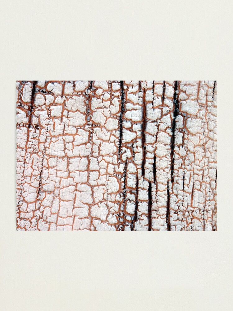 Alternate view of Crackling Photographic Print