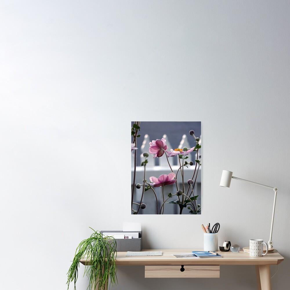 Japanese Windflowers Poster