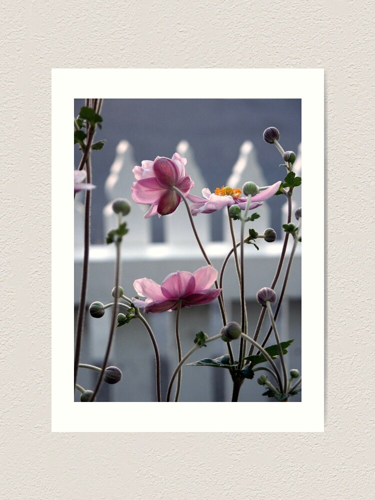 Alternate view of Japanese Windflowers Art Print