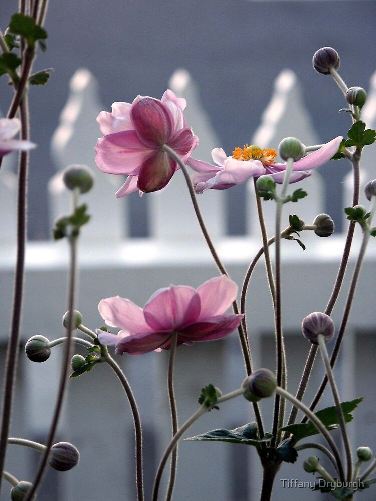 Japanese Windflowers by Tiffany