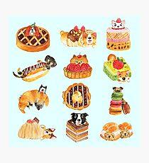 Puppy Pastries Photographic Print