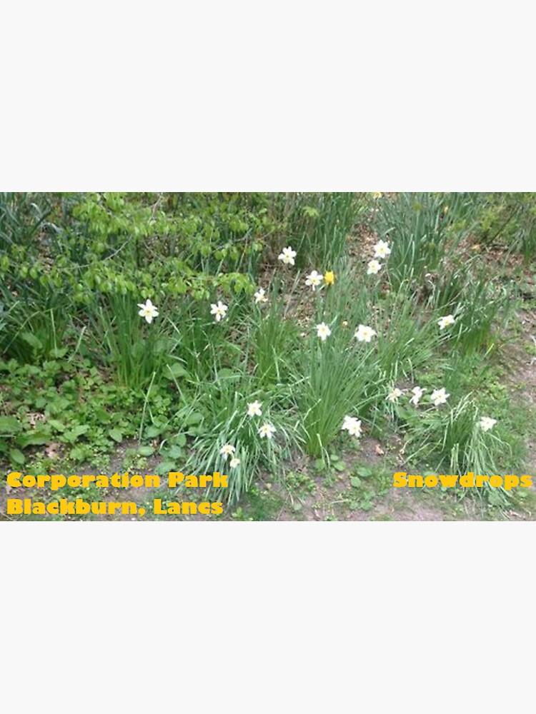Snowdrops - Corporation Park - Blackburn - Lancs by DJLancs