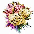 Floral firework by shalisa