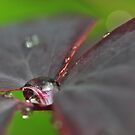 A single raindrop by Heather Thorsen