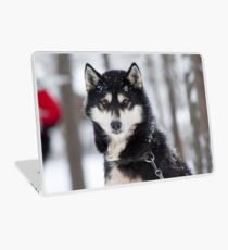 Husky dog breading centre Laptop Skin