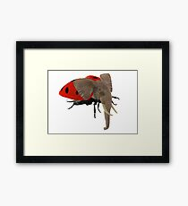 Extremely Rare Beetle Framed Print