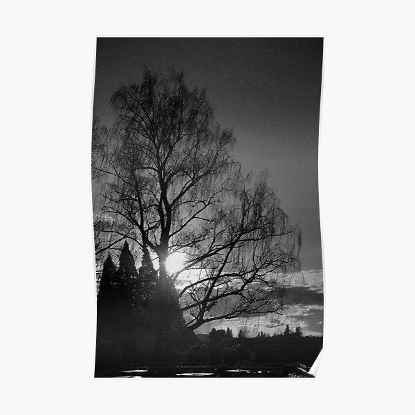 Setting Tree Poster