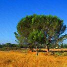 Pine-Tree Family by jean-louis bouzou
