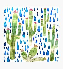 Cactus Rain Photographic Print
