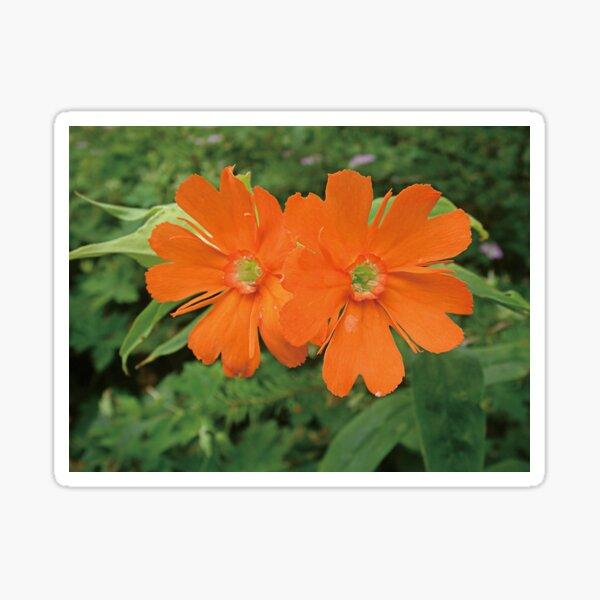 Orange Blumen und Sie sind die Welt Wohnzimmer Kunst Sticker