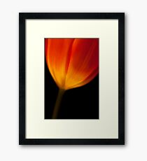 Tulip Lit From Within Framed Print