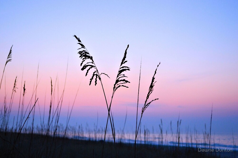 Sea Oats Sunrise by ©Dawne M. Dunton