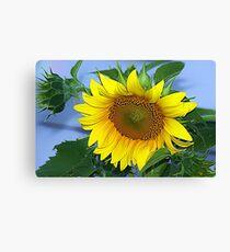 Sunflower yellow Canvas Print