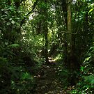 Deep In The Jungle, Guatemala (large view and you are there!) by Heather Friedman