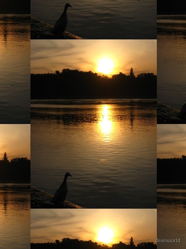 Sunset Duck on banks of Rhone River Avignon France by deanworld