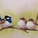 Superb Fairy-wrens by JulieWickham