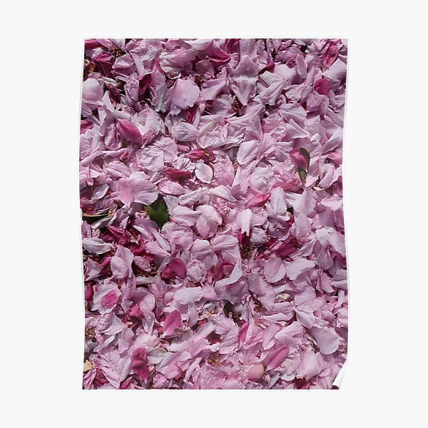 Fallen petals and leaf in contrasting shades of pink Poster
