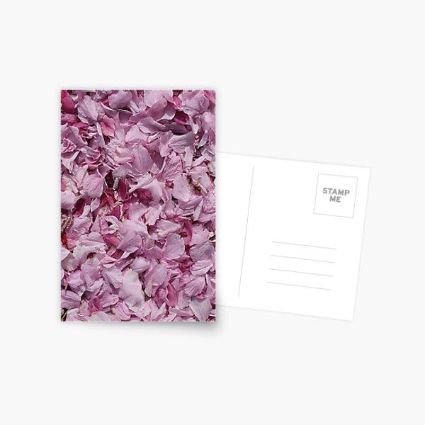 Fallen petals in contrasting shades of pink - closeup Postcard