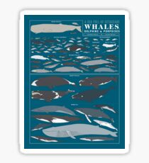A SEA FULL OF CETACEANS: WHALES, DOLPHINS, AND PORPOISES Sticker