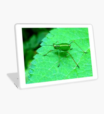 Green Bush Cricket Laptop Skin