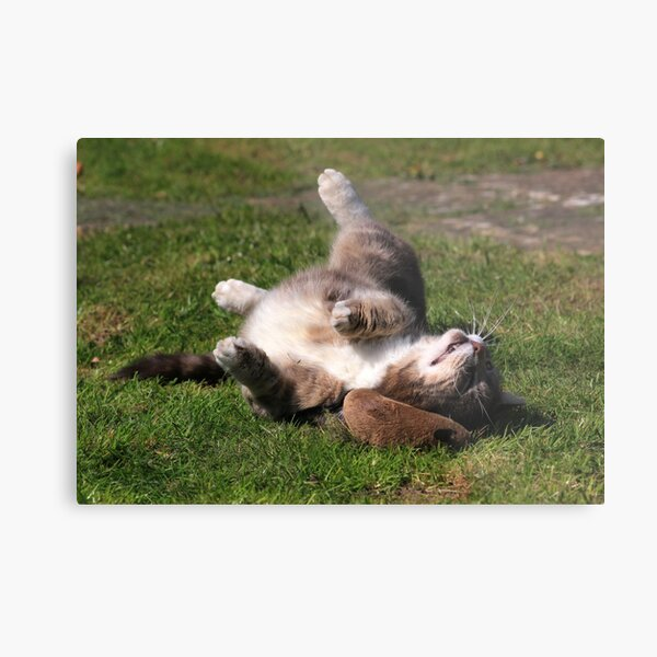 Tabby cat playing with toy mouse Metal Print