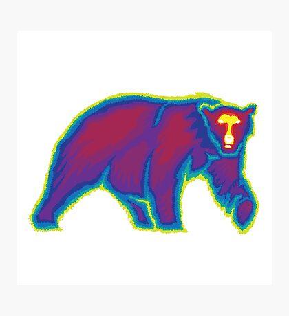 Heat Vision - Polar Bear Photographic Print