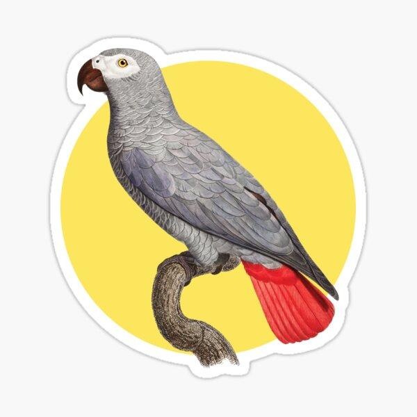 Buntes Papagei Motiv Sticker