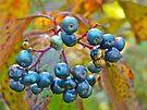 Autumn Viburnum Berries Series #4 by MotherNature