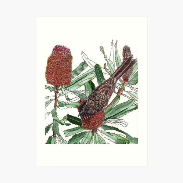 Wattlebird Banksia Art Print