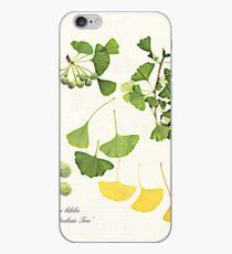 Ginkgo biloba botanical print iPhone Case