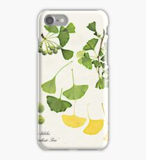Ginkgo biloba botanical print iPhone Case/Skin