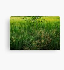 Green Swamp....... Canvas Print