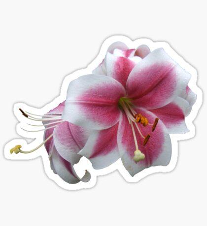 Blooming heart Sticker