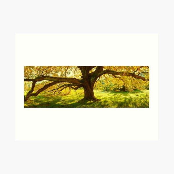 Autumn Colours of Myrtleford, Victoria, Australia Art Print