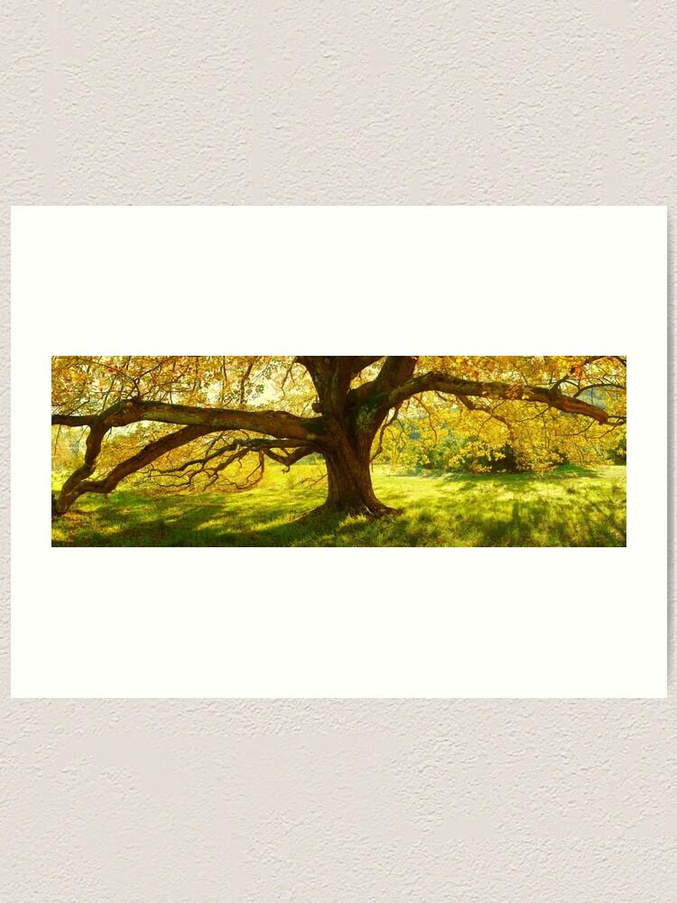 Alternate view of Autumn Colours of Myrtleford, Victoria, Australia Art Print
