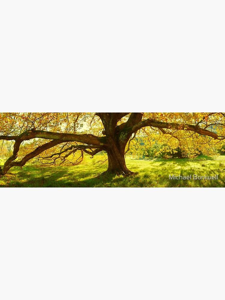 Autumn Colours of Myrtleford, Victoria, Australia by Chockstone