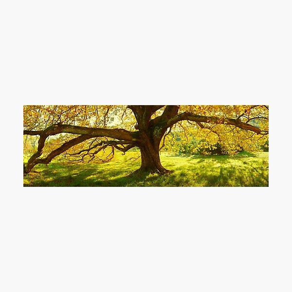 Autumn Colours of Myrtleford, Victoria, Australia Photographic Print
