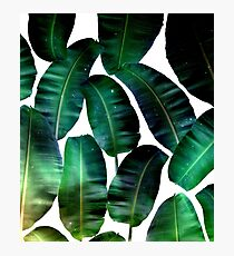 Cosmic Banana Leaves #redbubble #lifestyle Photographic Print