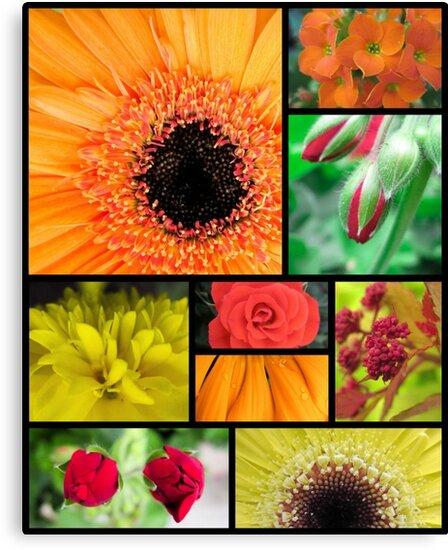 Macro Flowers by Natasha Brooke