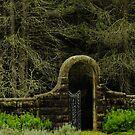 Breenhold, Mount Wilson by Gabrielle  Lees