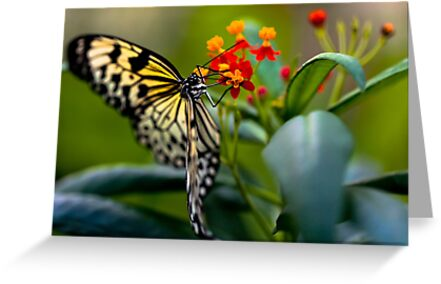 Butterfly Nectar by Richard Munckton